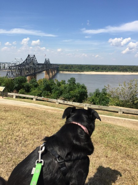 Looking westward across the Mississippi, at Navy Circle in Vicksburg, MS