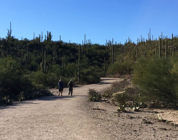 A little perspective on the size of those saguaros