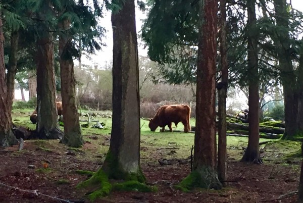 I don't think the Brothers Grimm wrote any fairy tales about forest bulls. Did they?