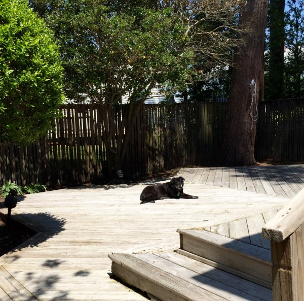 We're happy to see her so happy in her old back yard, but dang, we wish she had opposable thumbs. We could use more help!