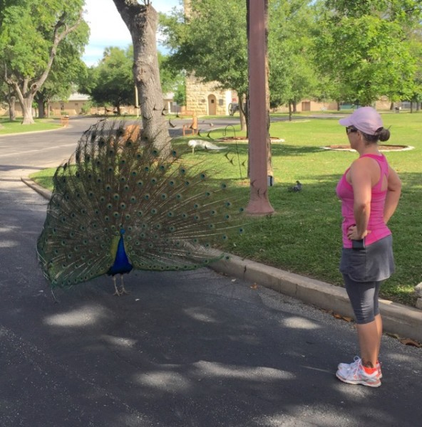 Trying to figure out how best to take on a peacock...
