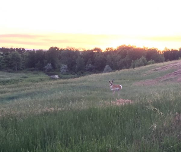 The base is home to herds of pronghorn antelope. We saw nearly a dozen grazing between buildings.