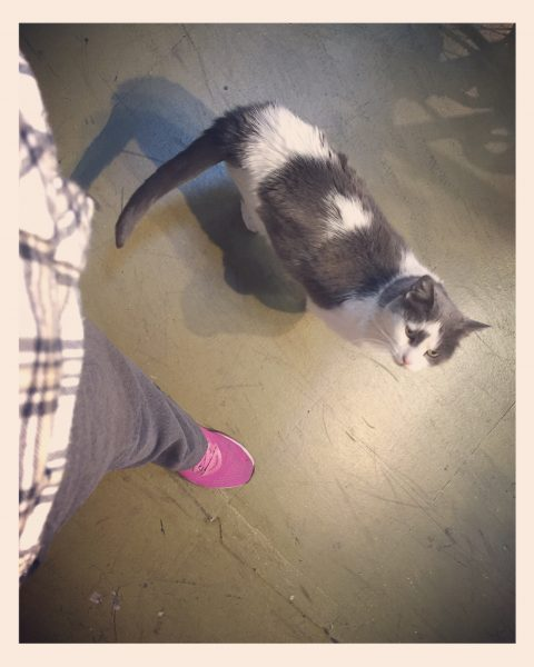 After that, we took our bicycles to a local shop, because they too were in need of some attention. Primarily, my bike needed new handle bars and grips after an unfortunate highway dragging incident in August. The shop cat matched my outfit. And cats do make me sneeze, so achoo!
